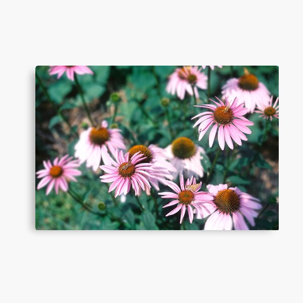 In The Flower Patch Canvas Print