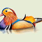 Mandarin Duck Watercolor Artwork by Alison Langridge