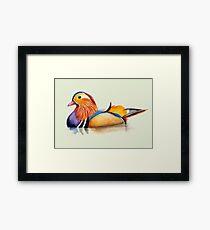 Mandarin Duck Watercolor Artwork Framed Print