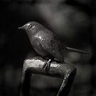 Immortal Bird by Christine Wilson