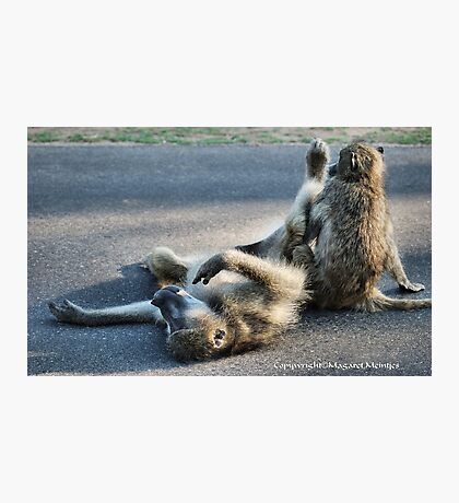 CHACMA BABOON – Papio ursinus - TOTALLY EXHAUSTED ! Photographic Print