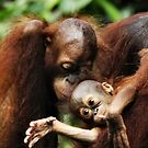 ORANGUTAN FAMILY Nature and Wildlife Original photographic design by John Hodges by VIDDAtees