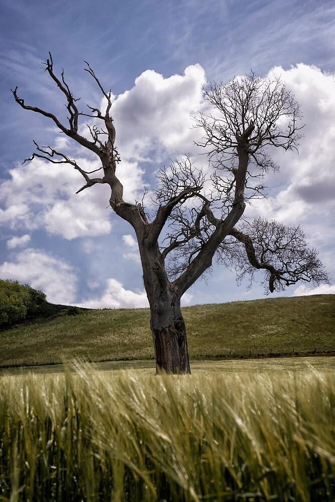 Dead Tree Dancing In A Cornfield by Michael Carter
