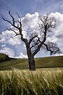 Dead Tree Dancing In A Cornfield by Michael Carter