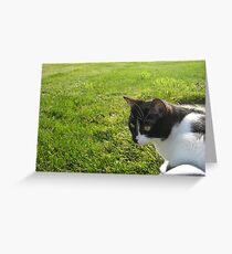 Kitty meets the Grass Greeting Card