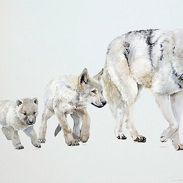 Wolf, the 4 stages of development. by TOMSREDBUBBLE