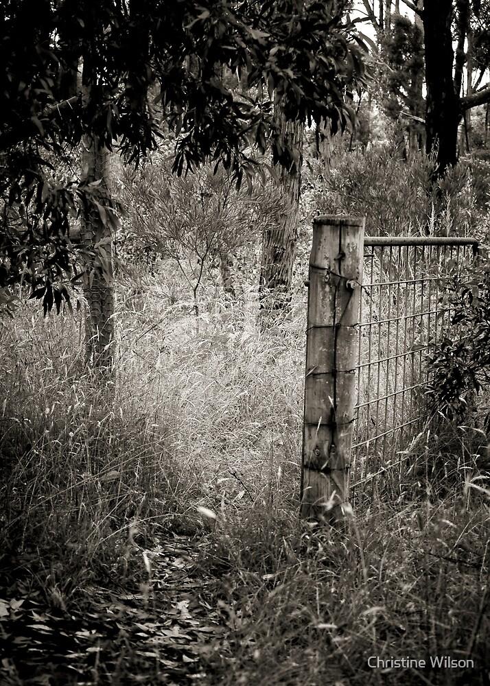 Hide and Seek by Christine Wilson