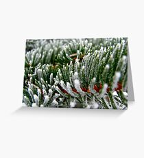 Frosted Evergreen Tree - Wisconsin Greeting Card