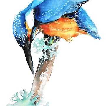 Kingfisher, Alcedo atthis, illustration by TOMSREDBUBBLE