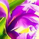 Flower Abstract  by Susan Werby