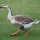 Goose by Jo McGowan