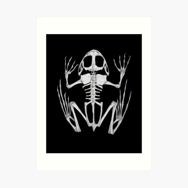 Frog Skeleton Art Print