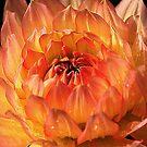 Orange Burst by Ray Clarke