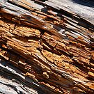 Decaying Log by Jared Manninen