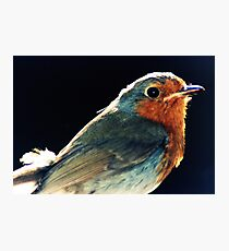 Robins Eye View Photographic Print