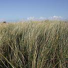 Tall grass by Profo Folia