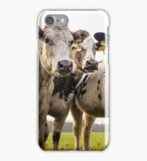 Beef Cattle On A Field iPhone Case/Skin
