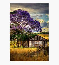 Jacaranda... Photographic Print