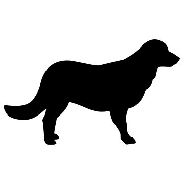 Flat Coated Retriever by Designzz