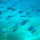 Underwater life by AmyCoomer
