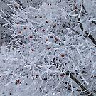 Frost bitten by Moninne Hardie