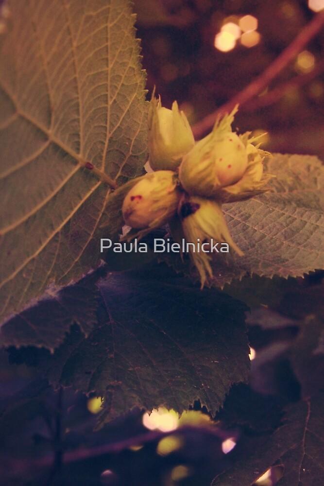 Hazelnuts by Paula Bielnicka