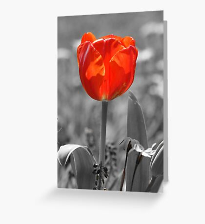 Orange Tulip Greeting Card