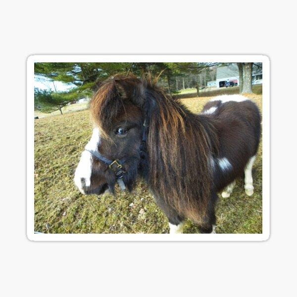 A Sweet Little Horse Sticker