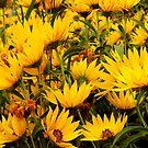 Wild Prairie Sunflowers In Profusion by WildestArt