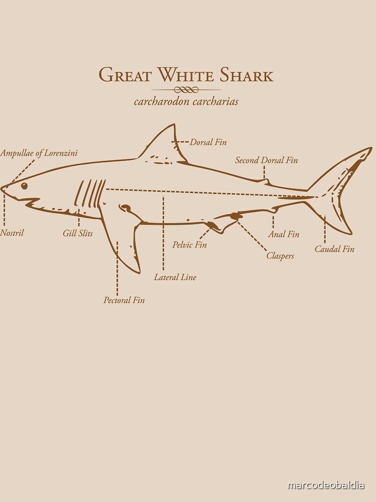Great White Shark Illustration von marcodeobaldia