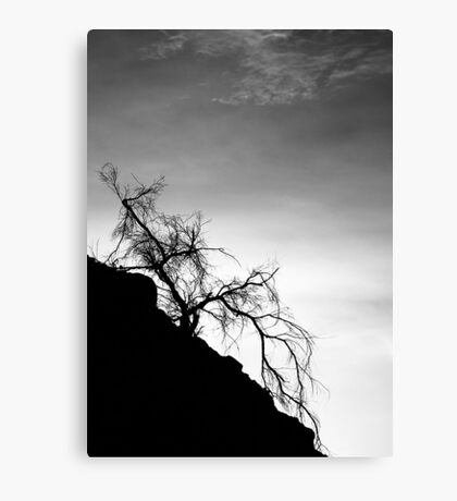 Tree on the Hill: Box Canyon Road Canvas Print