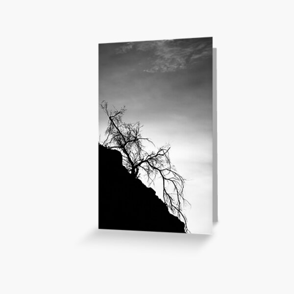 Tree on the Hill: Box Canyon Road Greeting Card