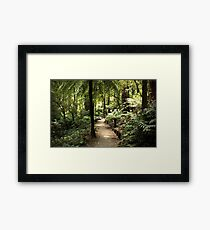 Walk in the Rain Forest Framed Print