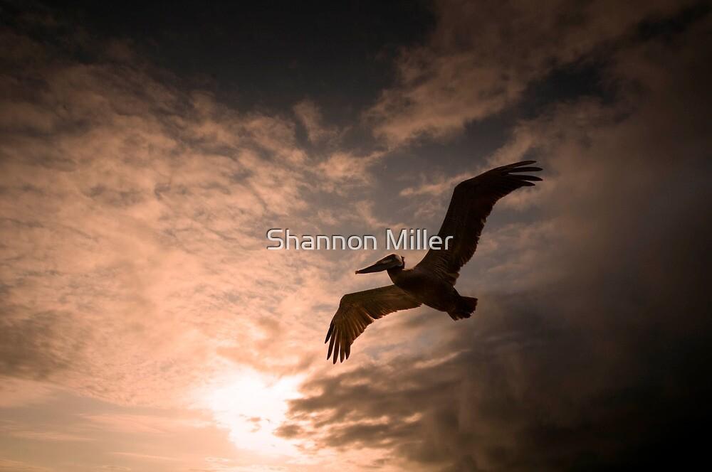 Pelican by Shannon Miller