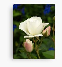Flowering Snow White Canvas Print