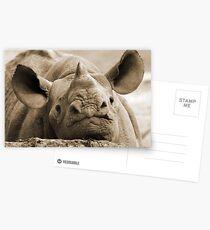 Zuri Postkarten