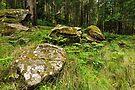 Forest Stonehendge by Anton Gorlin