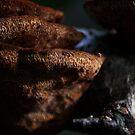 Wood Fungus by FraserJ