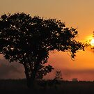 Sunrise in Kanha National Park by Angela1