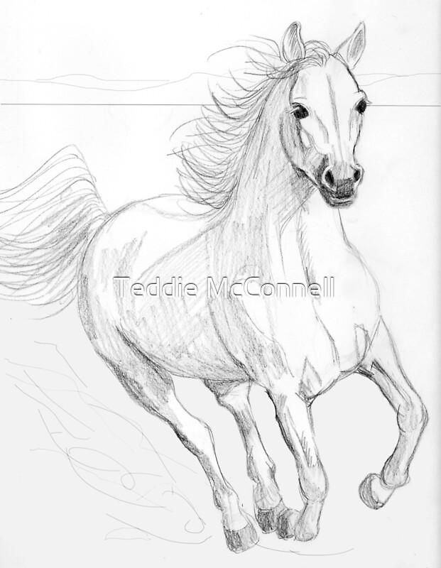 """Running Arabian Horse Pencil Drawing"" Photographic Prints ... - photo#35"