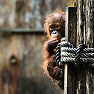 Baby Orangutan Borneo Sanctuary  Wildlife Photograph Graphic Tee by VIDDAtees