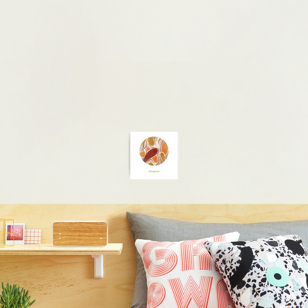 The Circles of Life: Glossopteris Photographic Print