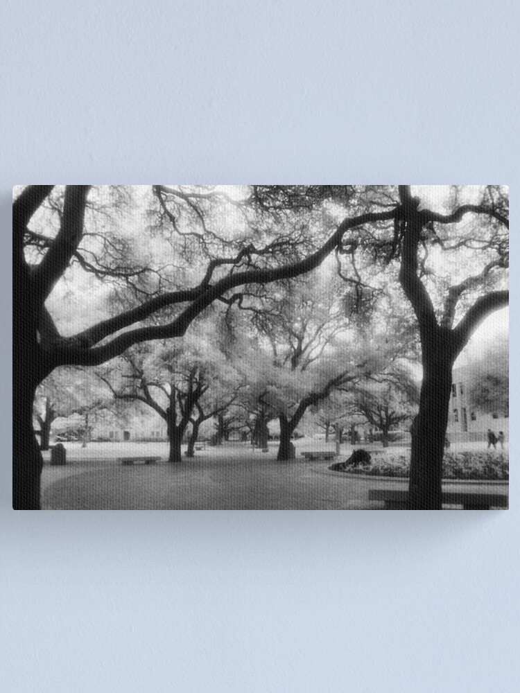 Alternate view of Texas A&M Campus Canvas Print
