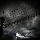 a light in the darkness  by S .