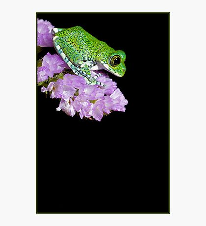 Peacock frog on pink flower Photographic Print