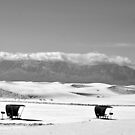 Snow in the desert I by Andrea Vallejos (nee Lindenberg)