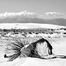 Snow in the desert II by Andrea Vallejos (nee Lindenberg)