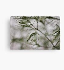 Precision/Evergreen Canvas Print