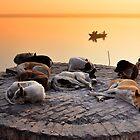 Let Sleeping Dogs Lie by Brendan Buckley