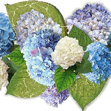 Hydrangeas from Faial by PrivateVices